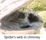 Web on chimney